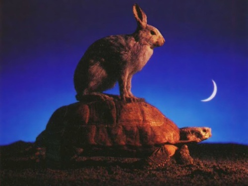 tortoise-and-hare-1