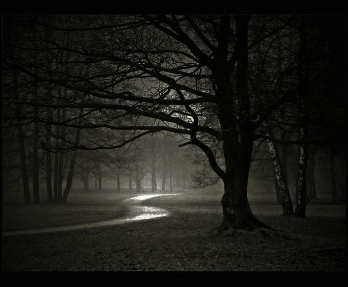 dark-forest-night-nature-31000