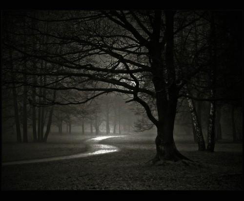 dark-forest-night-nature-31000